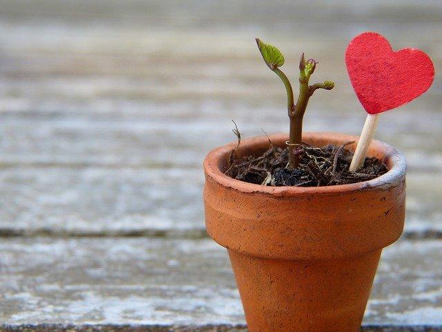 cuore e pianta