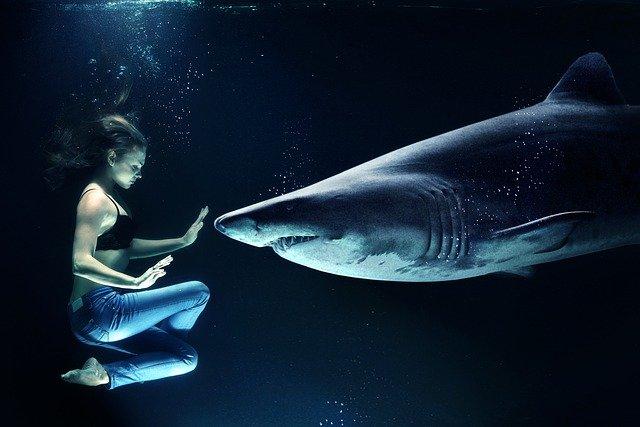 donna squalo